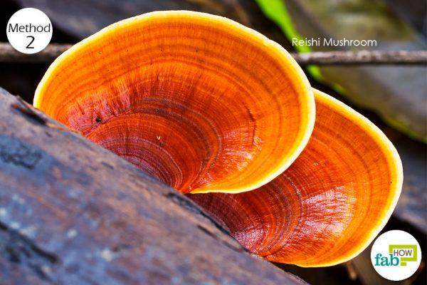 reishi mushroom for shingles
