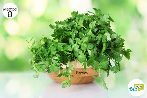 chew fresh parsley leaves every hour