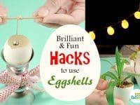 Brilliant Eggshell Hacks