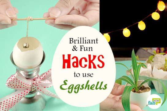 Brilliant Eggshell Hacks
