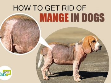 feat how to get rid of mange in dogs