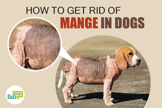 How To Treat Mange In Dogs Naturally