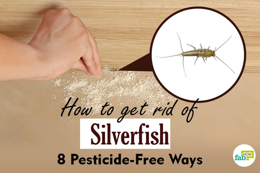 how to getr id of silverfish-featured image