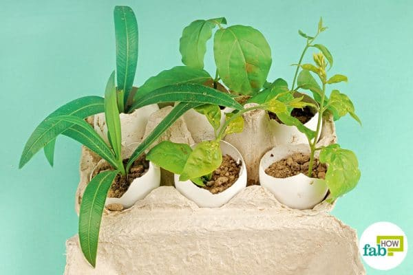 Use empty eggshells to grow small herbs and plants