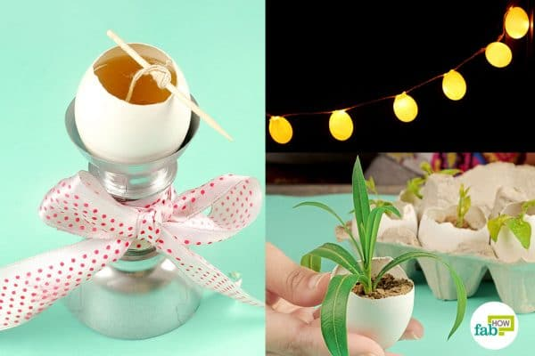 DIY eggshell hacks for home and garden
