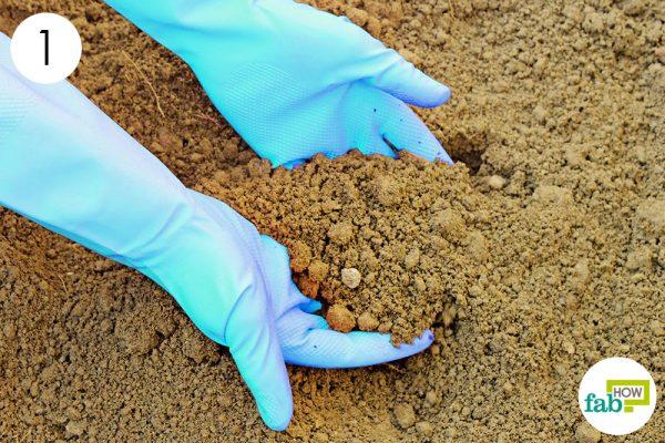 prepare the planting bed to grow muskmelon