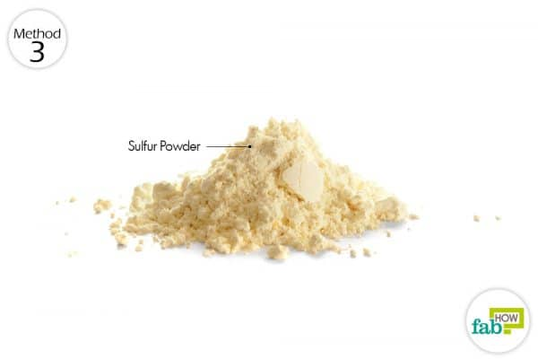 use sulfur powder to get rid of mange in dogs