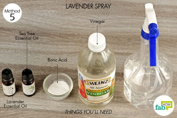 Use lavender spray to get rid of silverfish