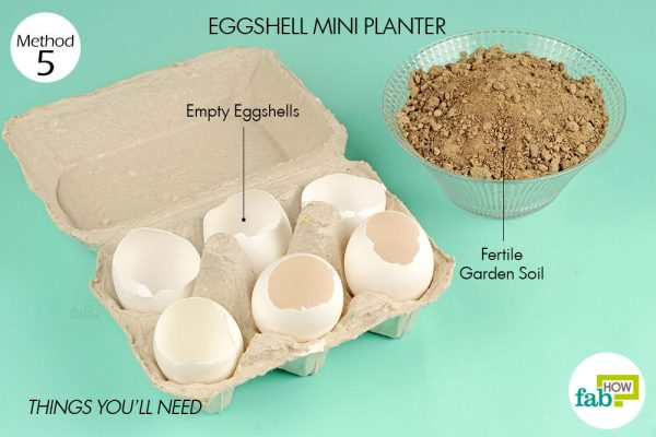 Things needed to grow plants in eggshells