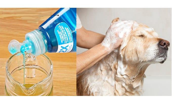 3 Diy Homemade Dog Shampoo Recipes For A Shiny Glossy