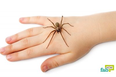 Top 10 Home Remedies to Treat a Spider Bite