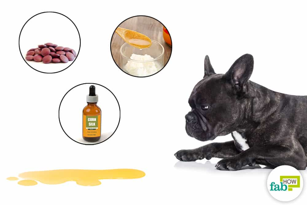 how to treat bladde infection in dogs