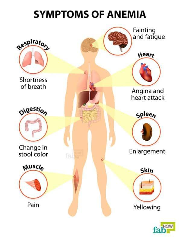 intro symptoms of anemia