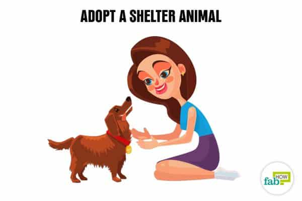 Create your bucket list and adopt a shelter animal