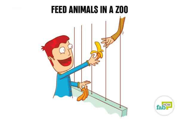 Create your bucket list and feed the animals in a zoo