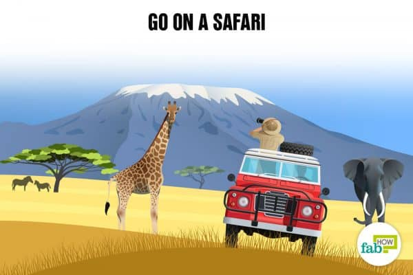 Create your bucket list and go on a wild safari
