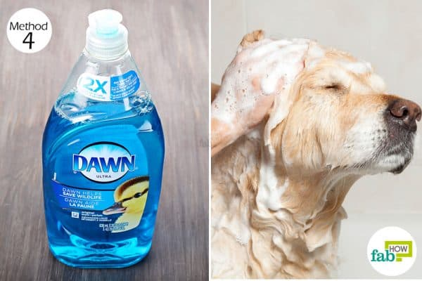 Wash your dog with Dawn dish soap to get rid of fleas