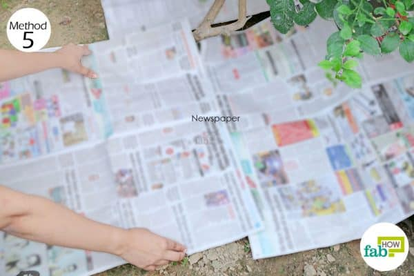Use a newspaper as DIY weed killer