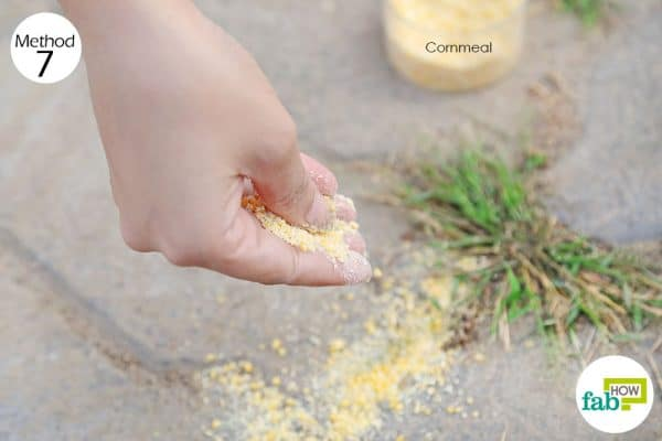 Use cornmeal as DIY weed killer