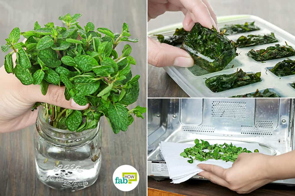 how to preserve and store mint