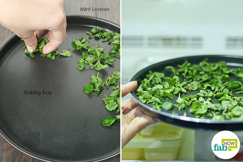 Put the mint leaves on a baking tray and then freeze to preserve and store mint