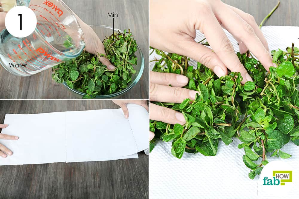 Wash the mint leaves and dry them on a paper towel to preserve and store mint