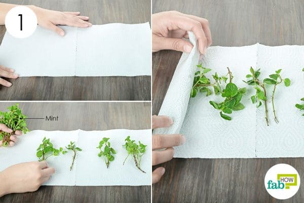 Place the mint sprigs on paper towels and roll them up to preserve and store mint