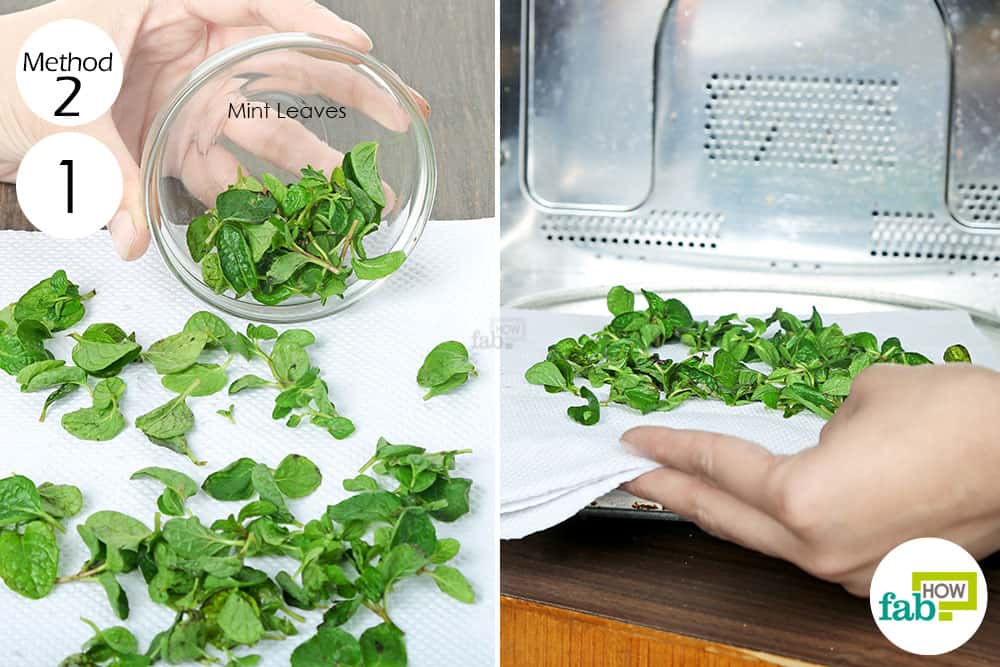 Microwave the fresh mint leaves to preserve and store mint