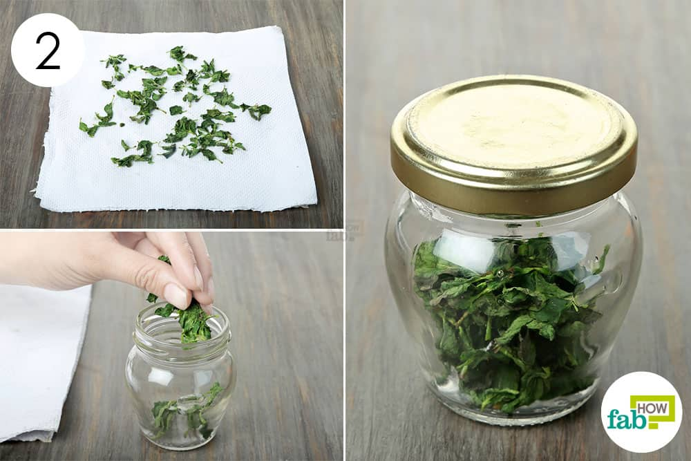 Store the dried mint leaves in an airtight jar to preserve and store mint