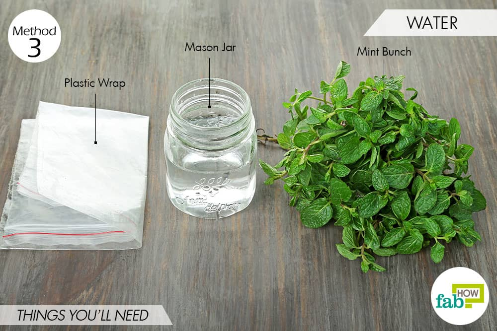 things needed to store mint-using water