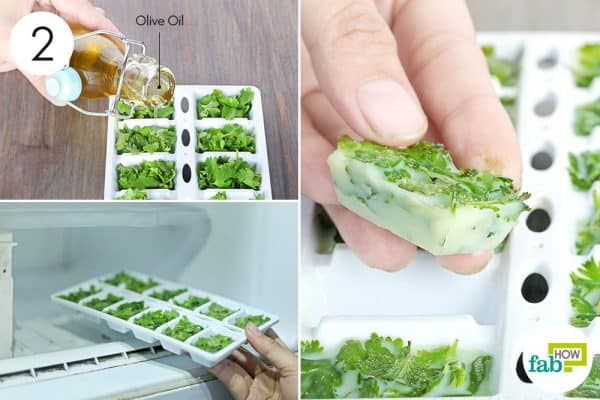 freeze in olive oil to store cilantro