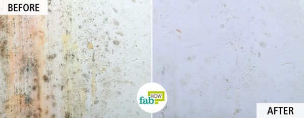 get rid of mold and mildew using white vinegar