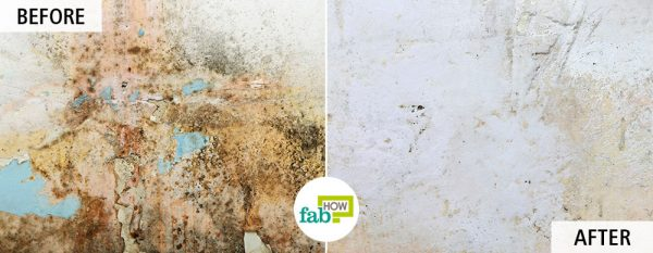 use tea tree oil to get rid of mold and mildew