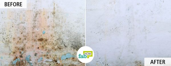 use bleach to get rid of mold and mildew