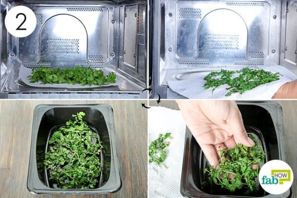 dehydrate to store cilantro