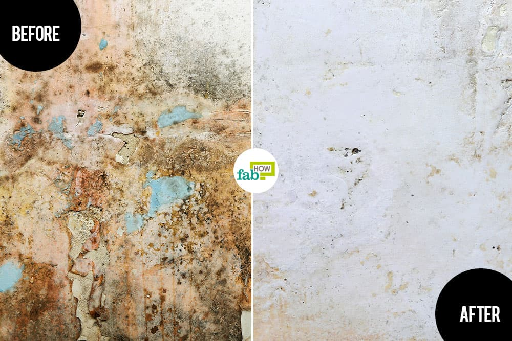 how to get rid of mold and mildew