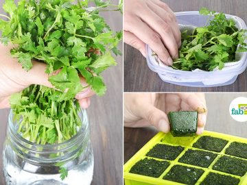learn how to store cilantro