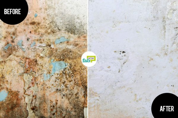 learn how to get rid of mold and mildew