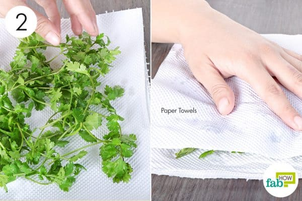 dry using paper towels to store cilantro