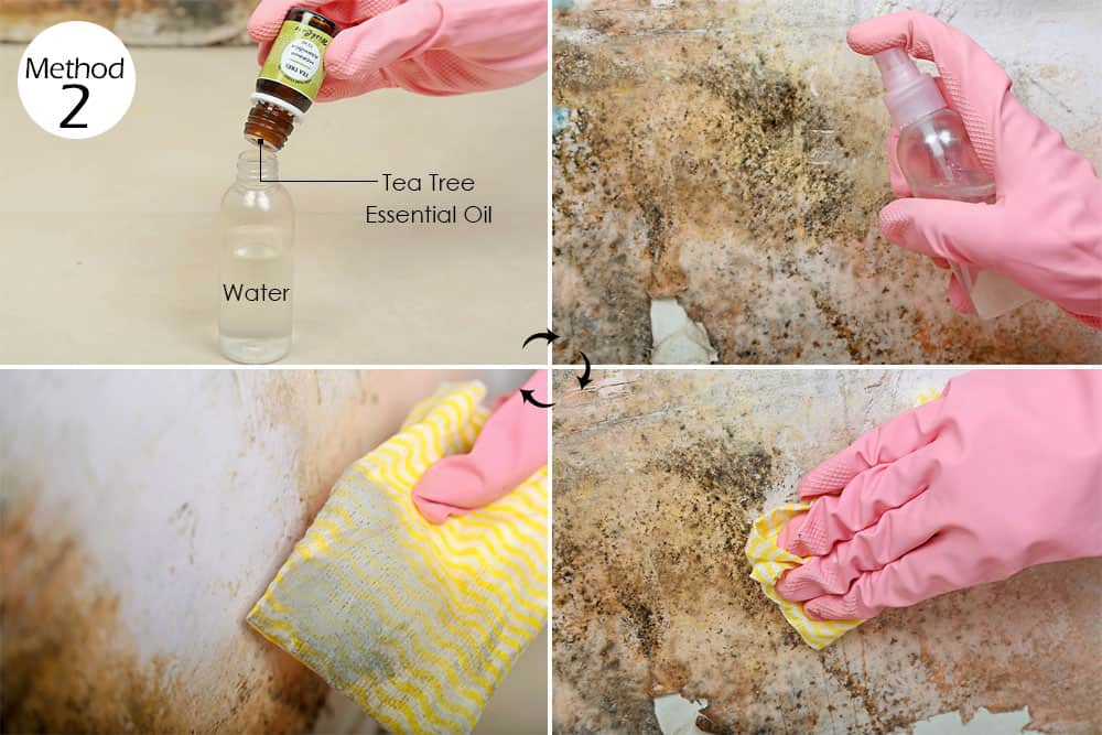 Natural Plant Spray To Get Rid Of Mold