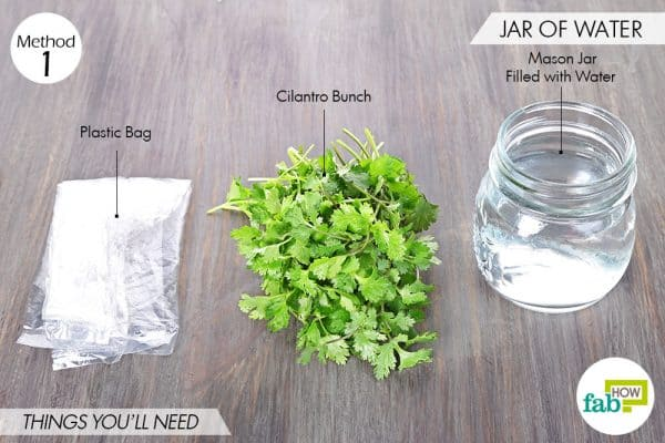 things needed to store cilantro using a jar of water