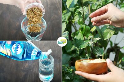 feat make DIY organic pesticide