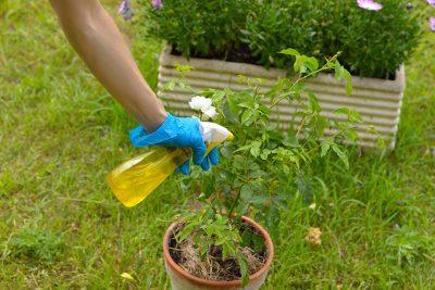diy organic pesticide