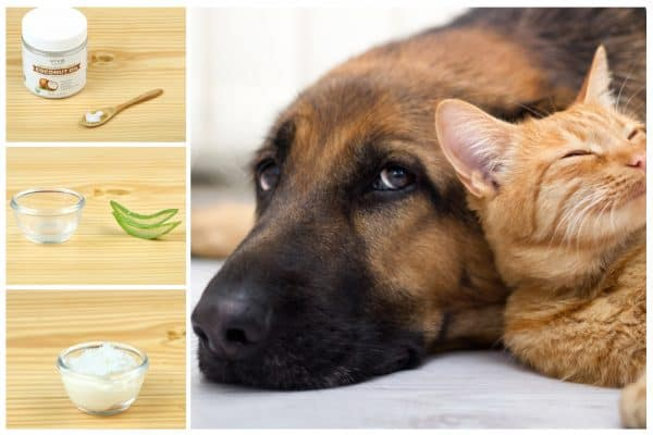 to get rid of constipation in pets
