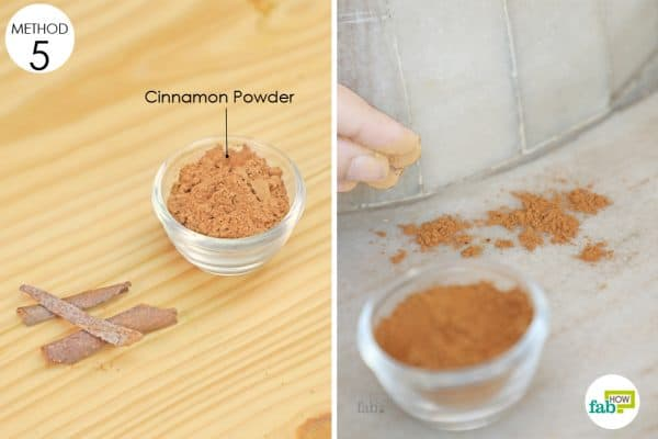 cinnamon to get rid of sugar ants
