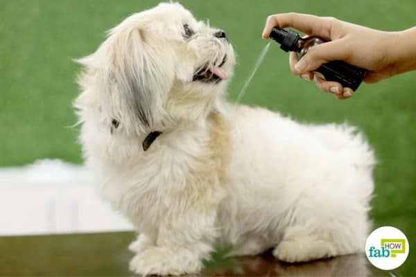 make homemade DIY anti-itch spray for your dog to help them get relieved from itching