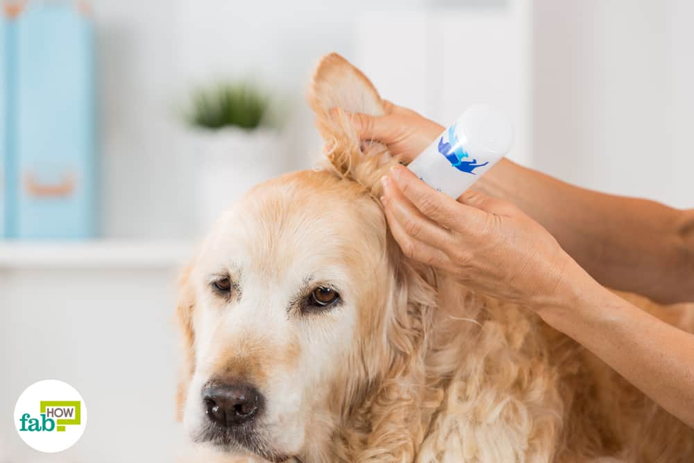 Get Rid Of Ear Mites In Pets 10 Home Remedies Fab How