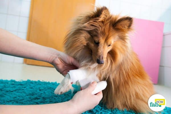 know how to heal your pet's wounds and minor cuts quickly and naturally