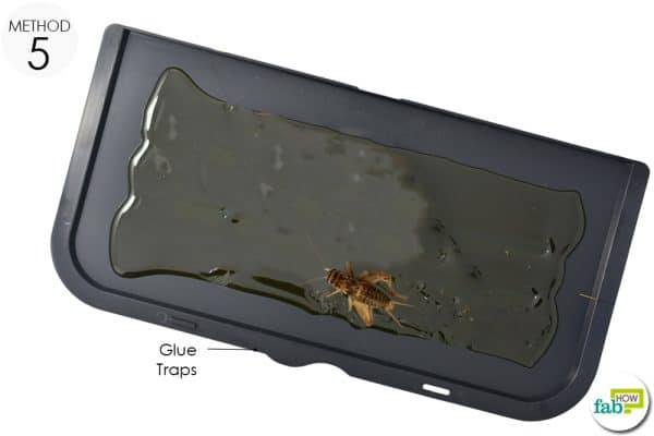 glue traps for crickets