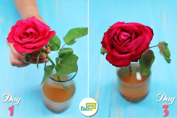 Apple cider vinegar for flowers